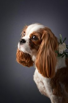 Profile of gorgeous Olive in the photo studio