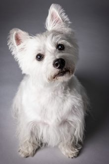 Beautiful White Dog with pretty eyes
