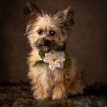 Precious portrait of rescue dog