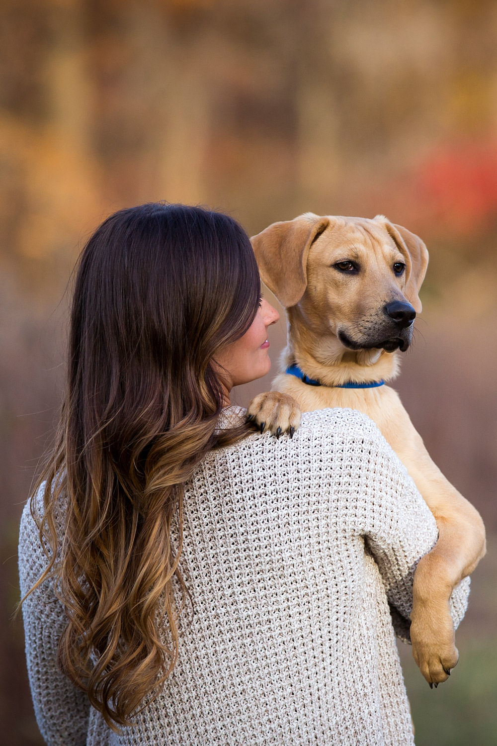 Pet Photography In Middletown Nj Good Doggy Photography