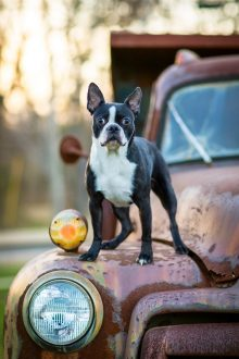 good-doggy-pet-photography-new-jersey-home-05