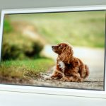 Modern float frame in white for dog portrait