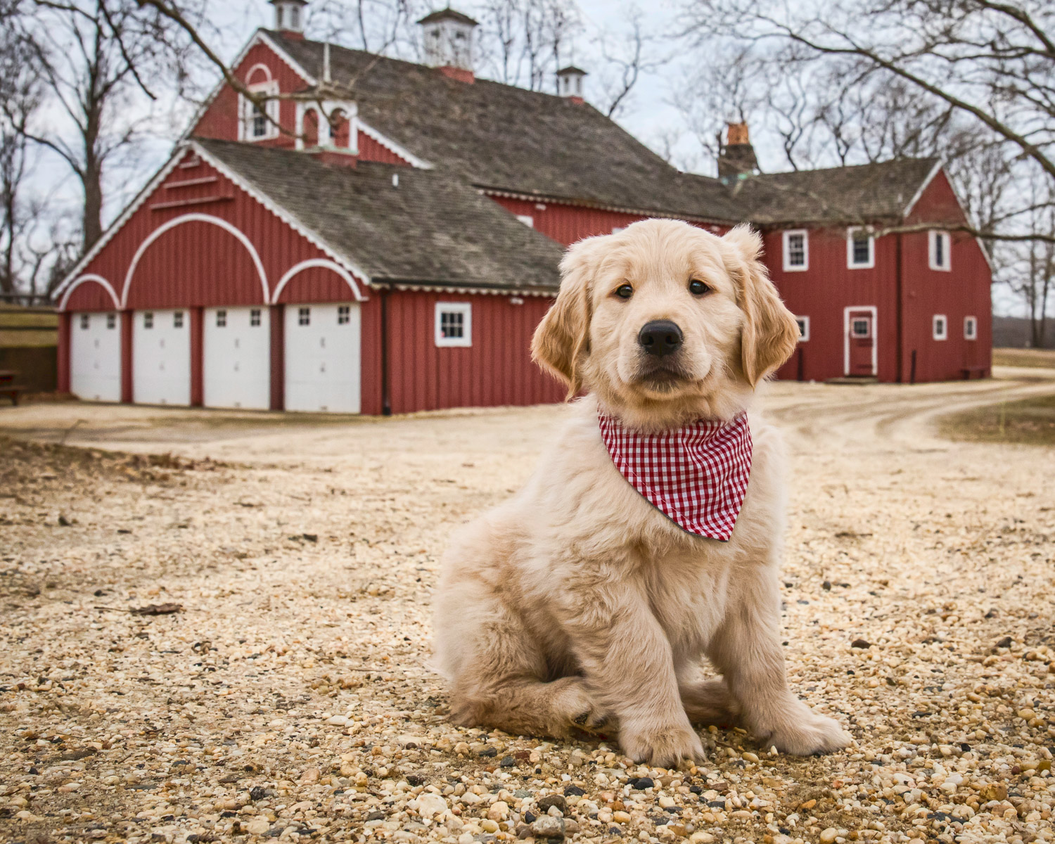 Precious photo of a puppy on the farm